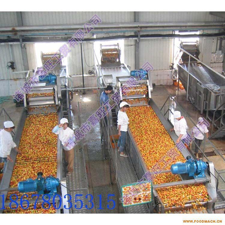 供应嘉旺JW优质高效洗姜机  全自动水果蔬菜清洗机