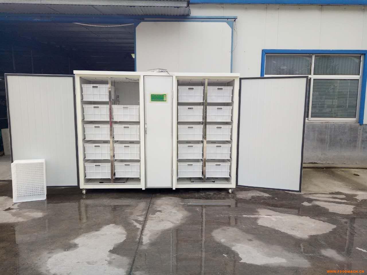 ds-300全自动豆芽机,豆芽清洗机